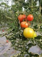 הגינה של תמרי 2
