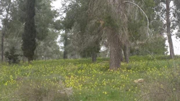 יער המלאכים (2)