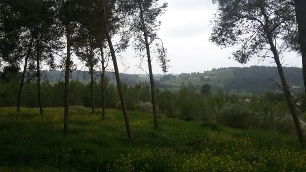 יער המלאכים (7)